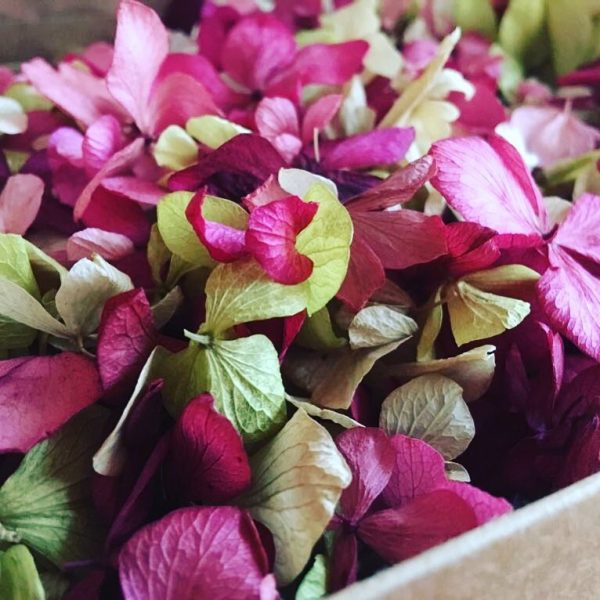Naturally Dried Hydrangea Petals